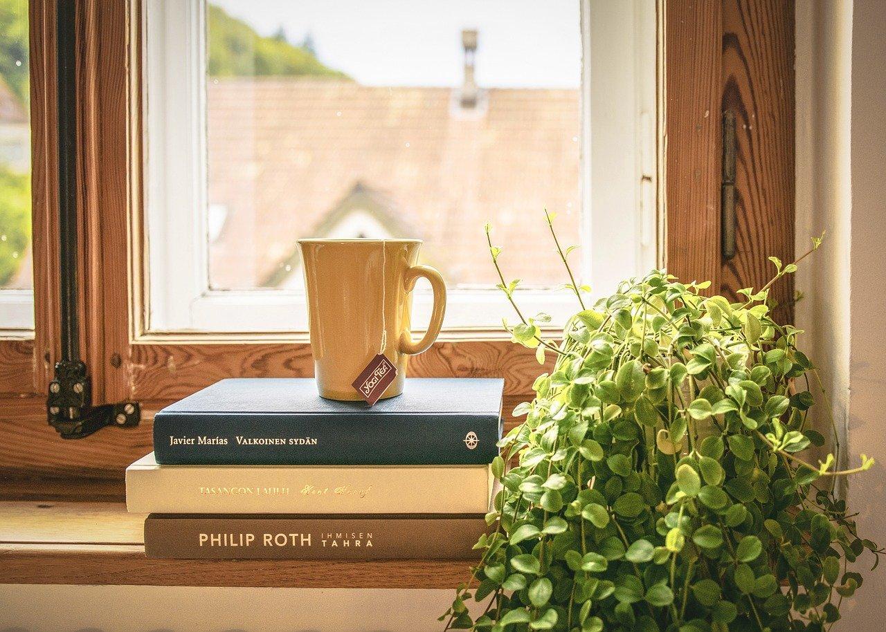 Housplant on a window